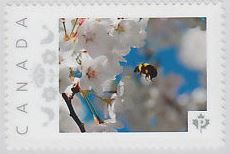 Canadian stamps. Bees and flowers_1