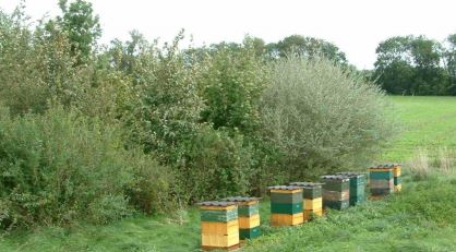 Monitoring and analysis of bee products near Munich airport